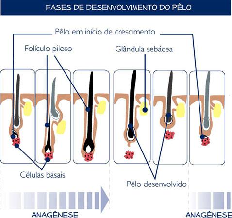 Fases de desenvolvimento do pêlo